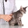 Ветеринарные клиники в Шаране